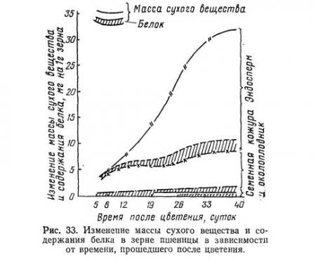 Фитин содержание в эндосперме пшеницы