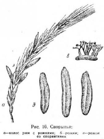 семя льна с гвоздикой от паразитов отзывы